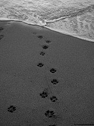 Unvergessen Seite 2 Hund Und Katz Tierhilfe Ev Webseite