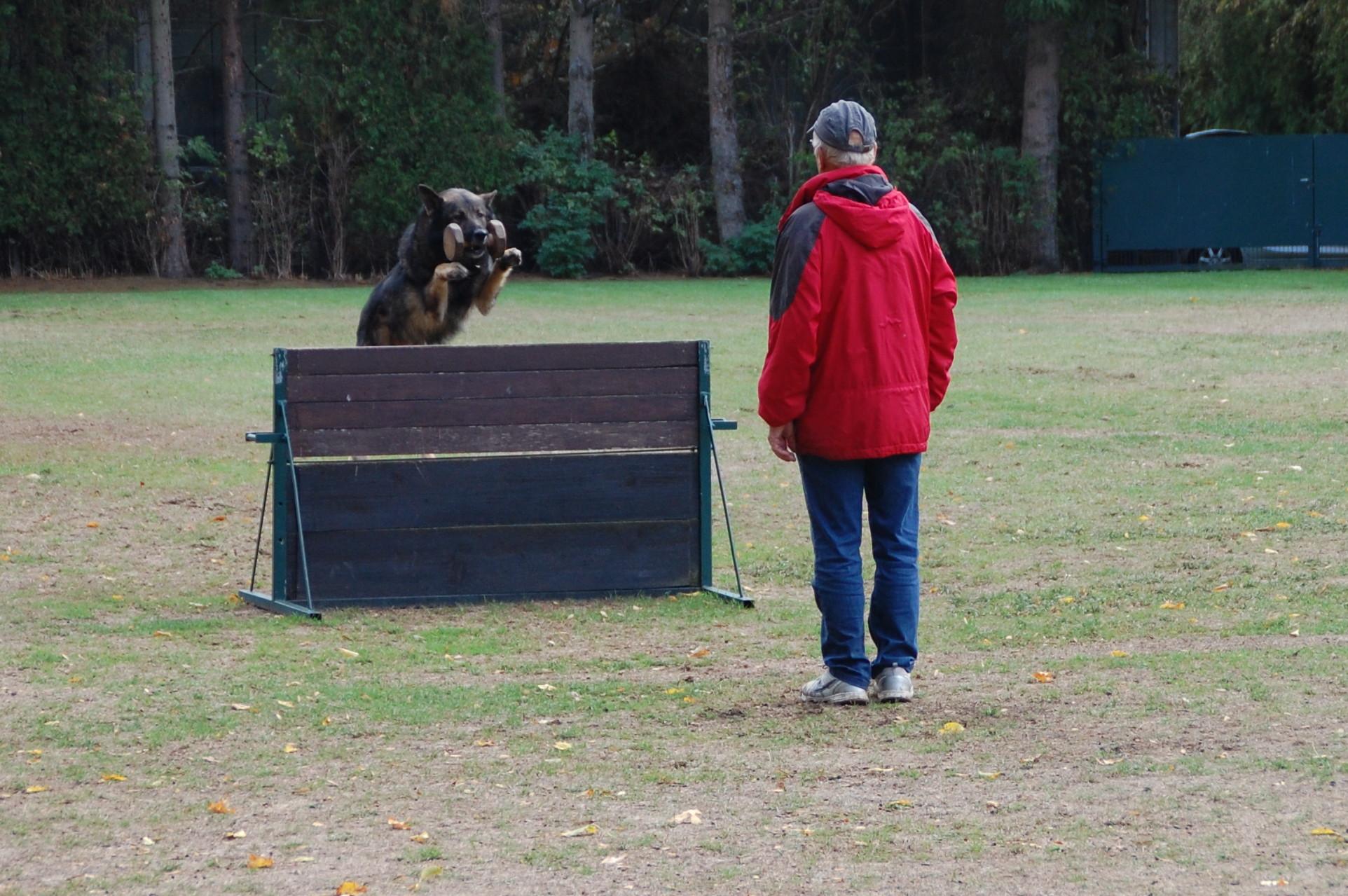 Dingo vom Silvano und Reiner Müller an der Meterhürde