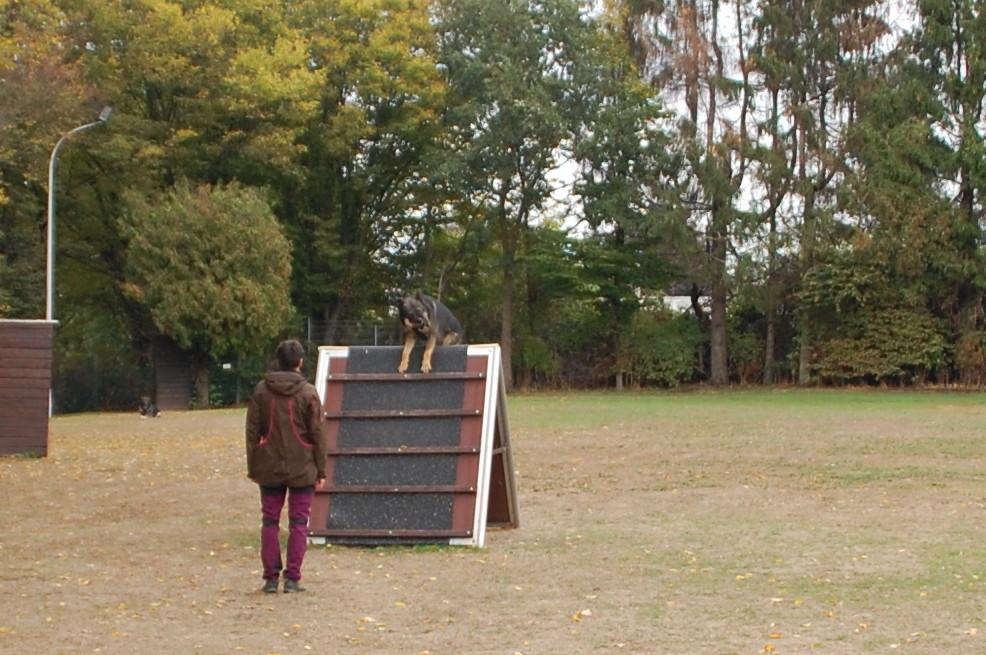 Hutch bringt das Apportierholz über die Schrägwand