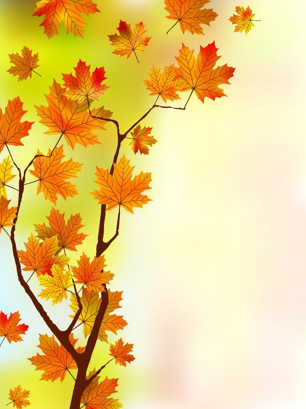紅葉した楓の背景 beautiful maple leaf background