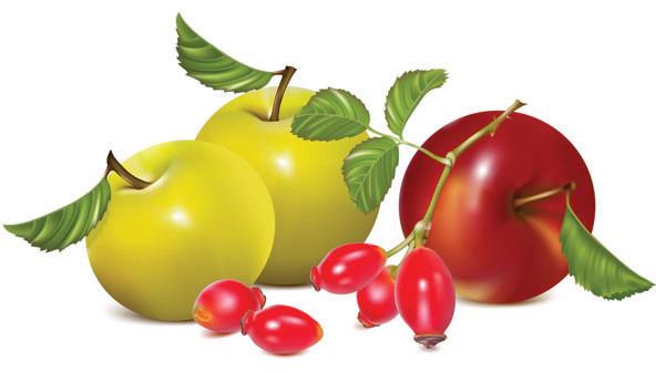 新鮮な果物のクリップアート fruits vector2