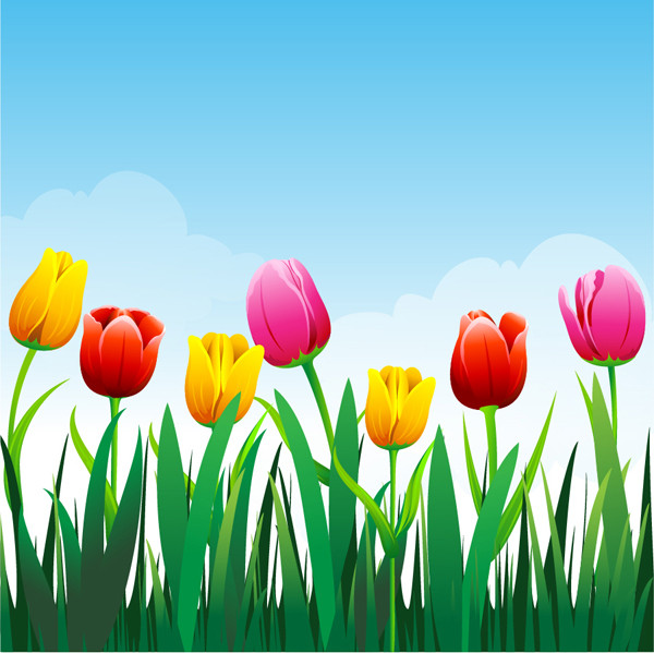 美しいチューリップの背景 Tulip flower background