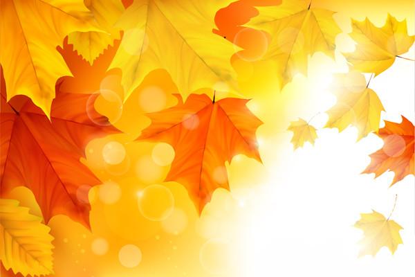 秋の紅葉の背景 Autumn Maple Leaves Background Illustration