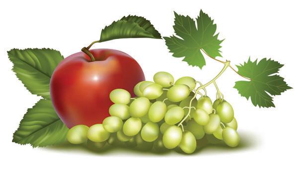 新鮮な果物のクリップアート fruits vector1