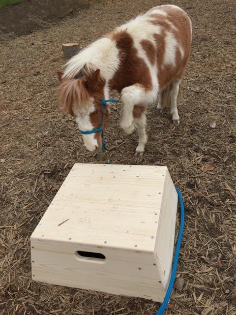 Zirkuspodest für Ponys