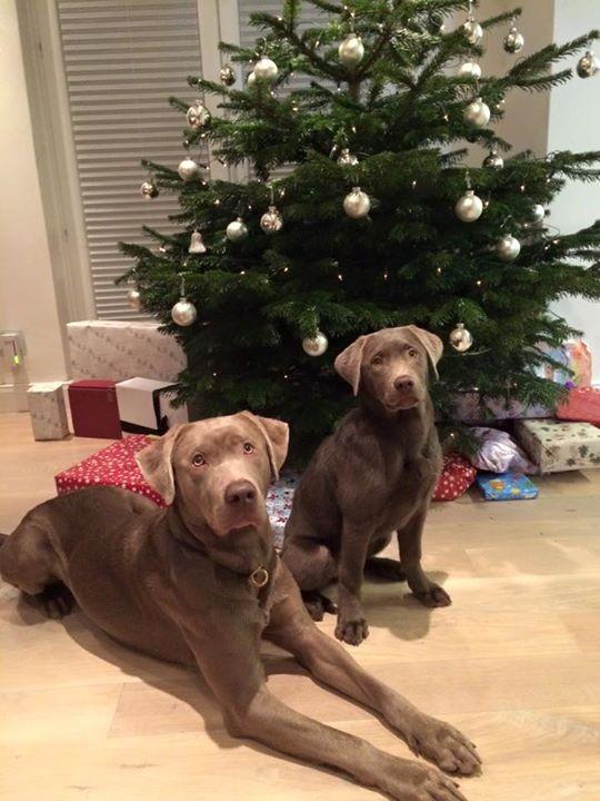 Auch wir wünschen euch frohe Weihnachten!