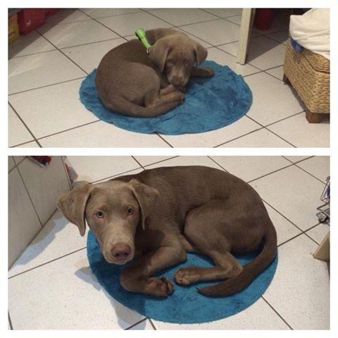 Jetzt ist es soweit, der Teppich ist zu klein!