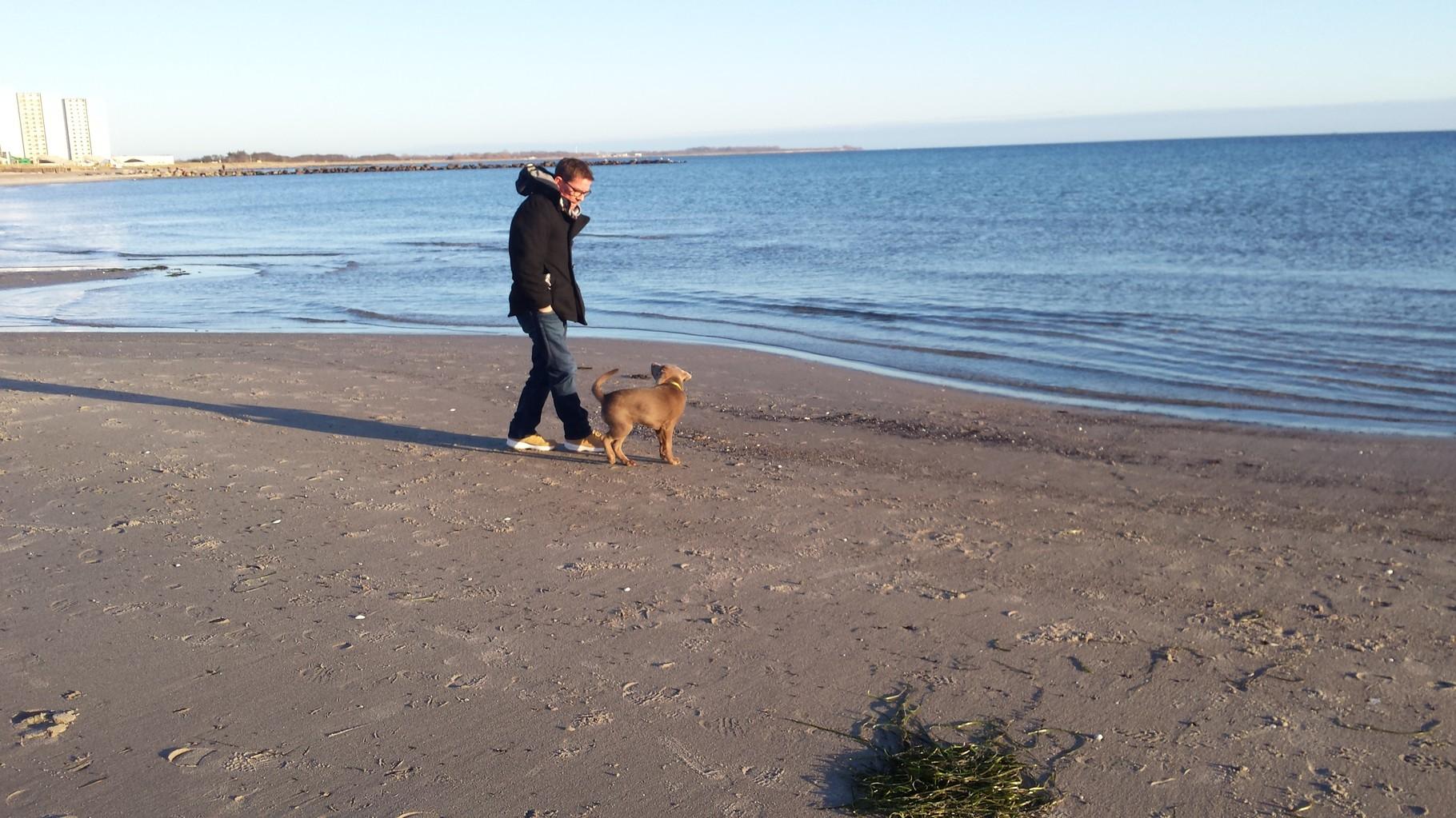 Mit Herrchen am Strand, für einen Labbi gibt es nix schöneres
