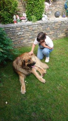 Tierbehandlung mit Pranic Energy Healing