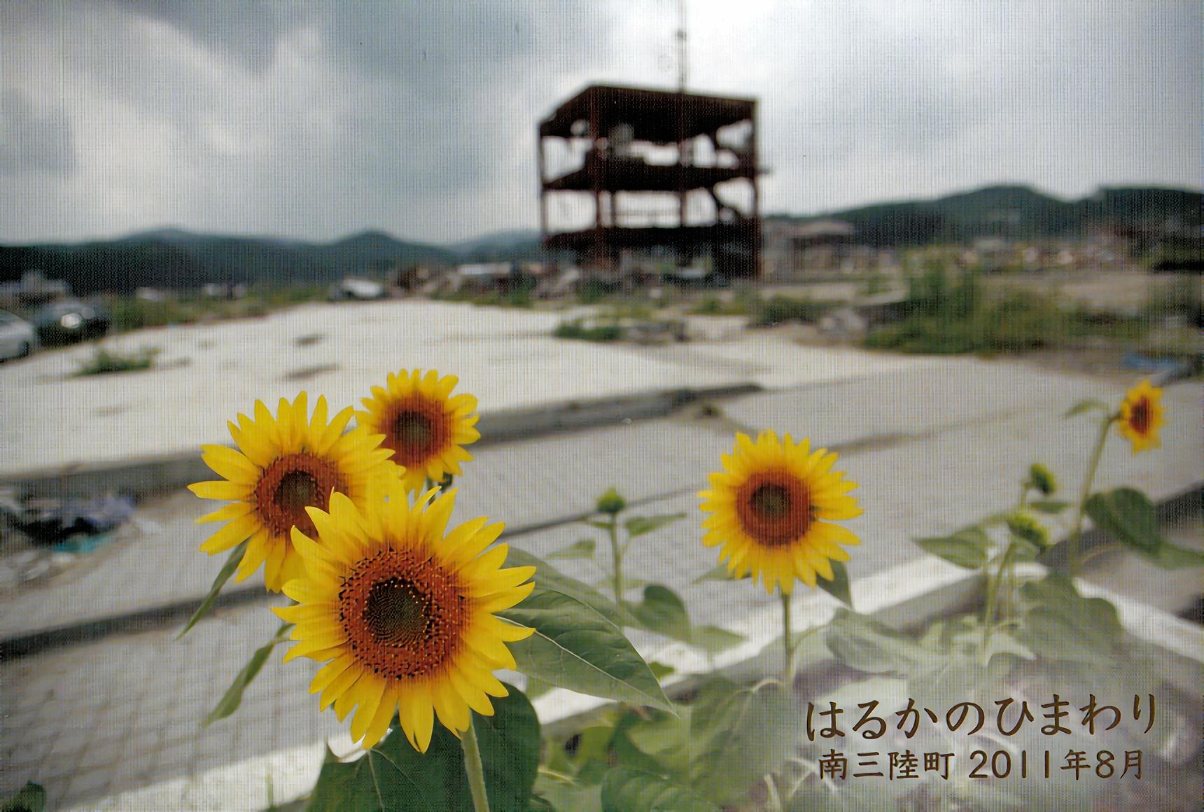 さて、本年度も松葉杖のカメラマン「シギー吉田」さんの「南三陸町に咲くはるかのひまわり」のポストカードも同封いたします。