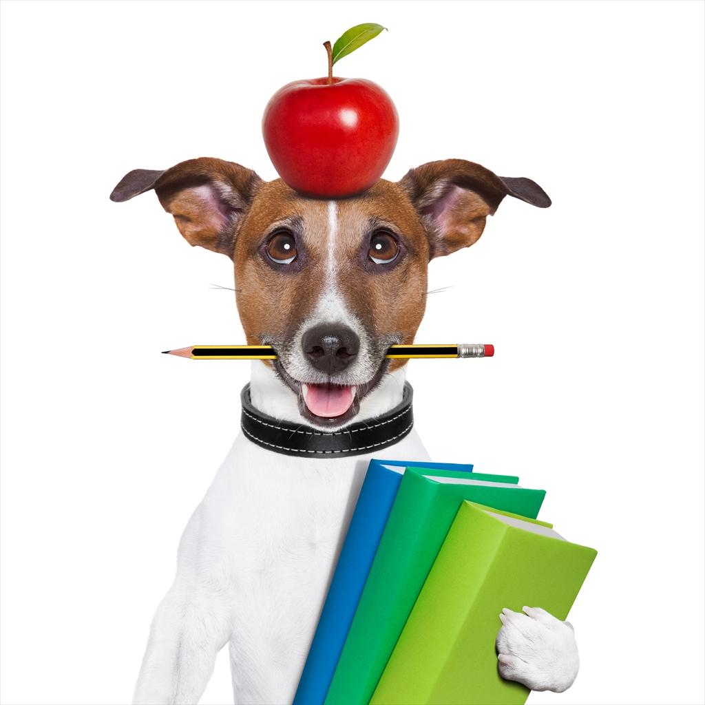 リンゴが乗ると緊張する