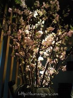 生け込み:桜は一種でも十分華やか
