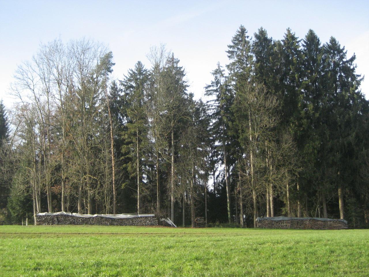 Stärkliswiler Wald