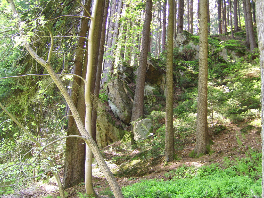 Ein Blick vom See in den angrenzenden Wald