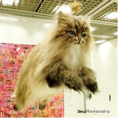 【願い】2018.5 猫2W30cm×D43cm×H66cm 「ちゃちゃ」と一緒に生まれた兄弟猫で友人の愛猫だったチンチラゴールデンの「さんちゃん」