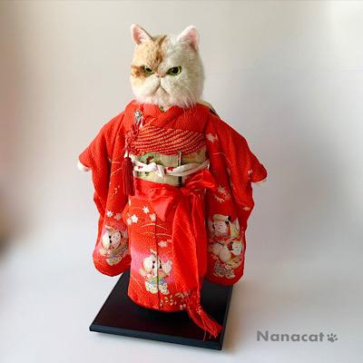 【市松ゑき子】2019.5 エキゾティック・ショートヘアの猫顔市松人形