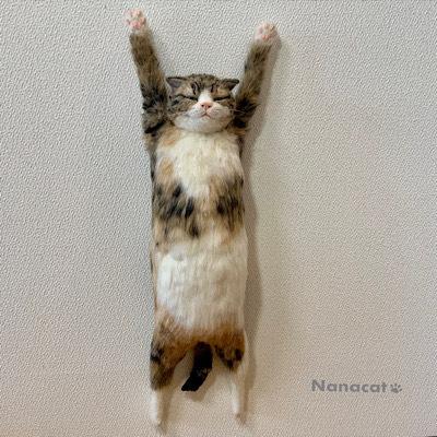 【壁掛けにゃんこ バンザイ】2019.3 はりつけられてるんじゃありませんよ!壁に飾れる猫なんです!