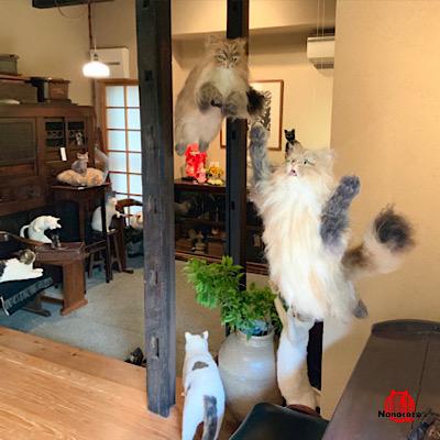 初個展【ありがとう 猫】2019.6 ギャラリー上り屋敷内