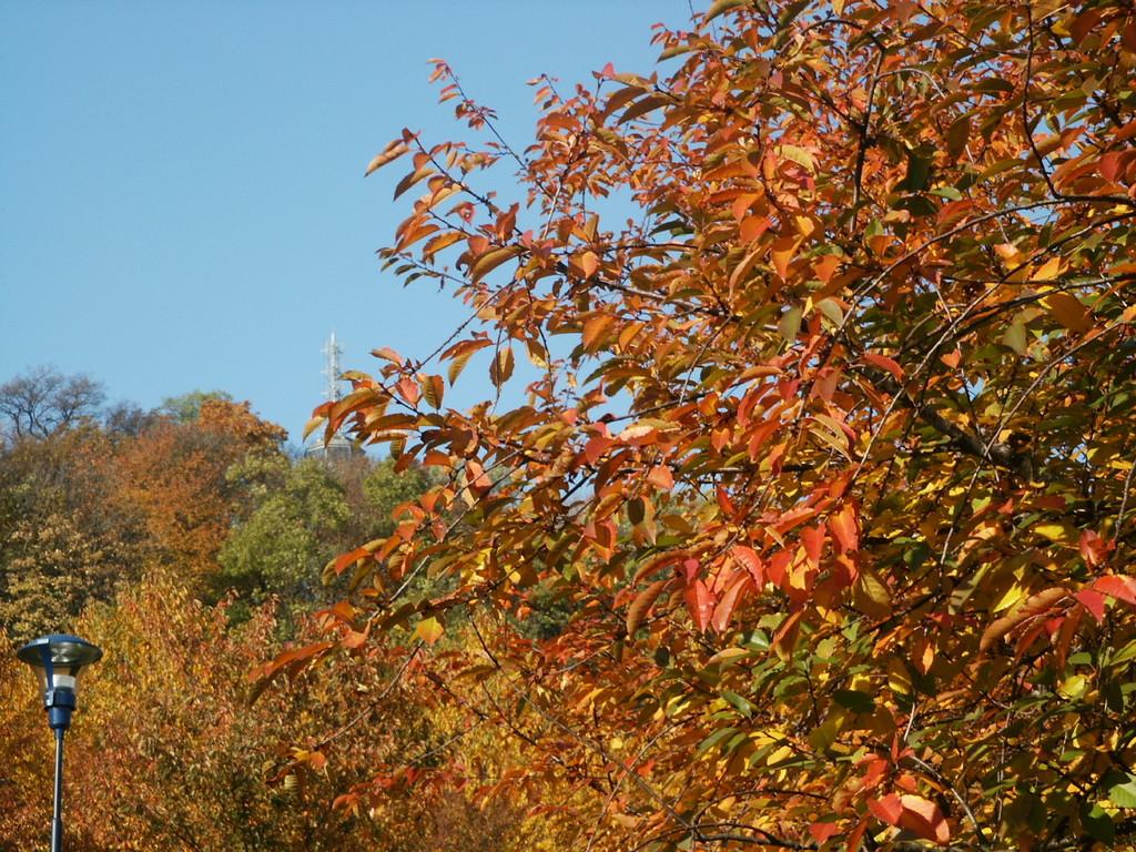 Goldener Herbst in Prag / Anfang November