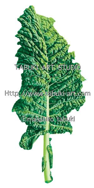 ケール 野菜 kale 青汁
