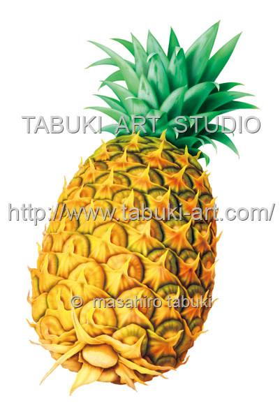 パイナップル フルーツイラスト fruit illustration