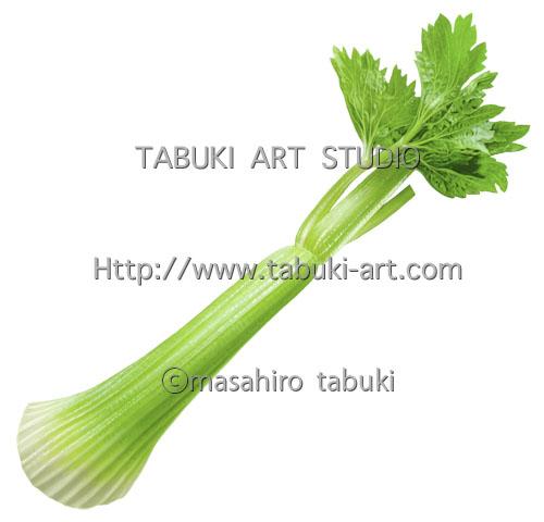 RD 3171 セロリ 野菜 食材