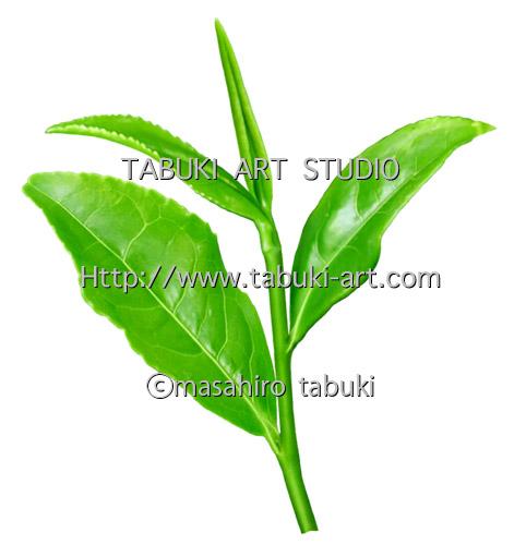 RD2093茶の葉