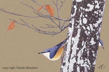 野鳥画 ゴジュウカラ イラスト 小鳥