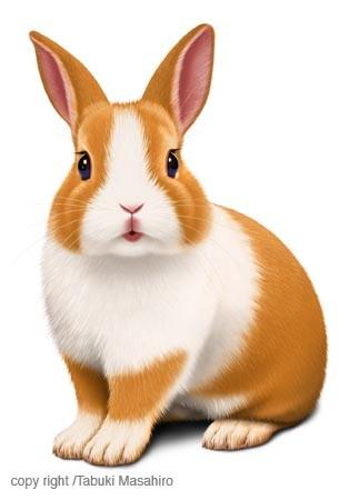 ウサギのイラスト ペット