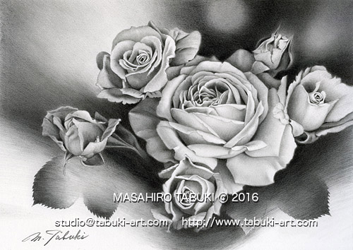 RD 22102 sisterly  バラ 薔薇 ばら 鉛筆画