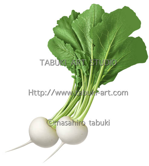 蕪 turnip 野菜 vegetabables Greens illustration