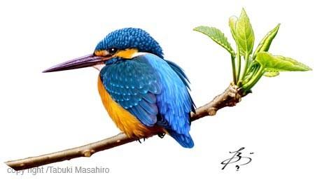 カワセミ 翡翠 日本の野鳥 青い鳥 イラスト