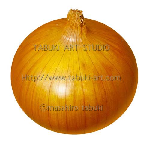 RD_3192タマネギ 玉葱 野菜 イラスト