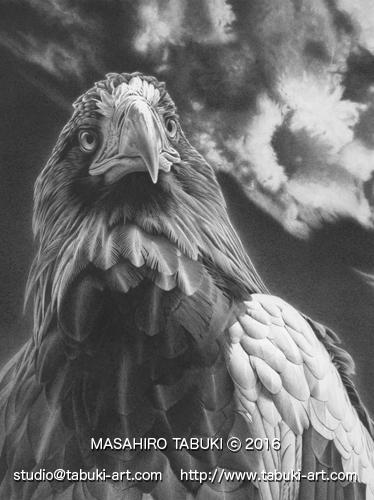 RD 22104 eagle オオワシ 大鷲 鉛筆画