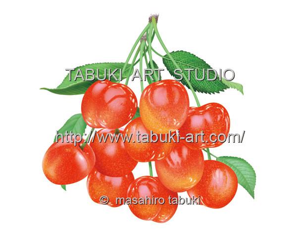 サクランボ URD1189