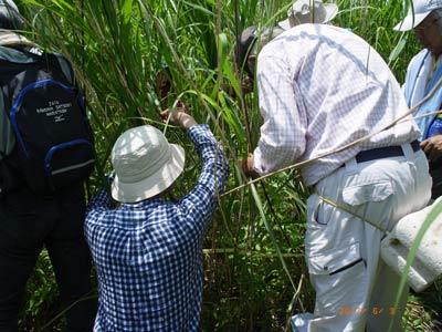 渡良瀬遊水地植物の会 調査会の様子