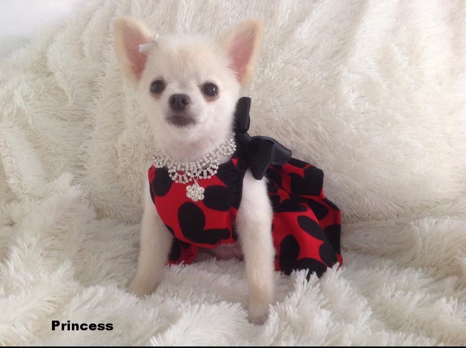 Princess from North Carolina USA