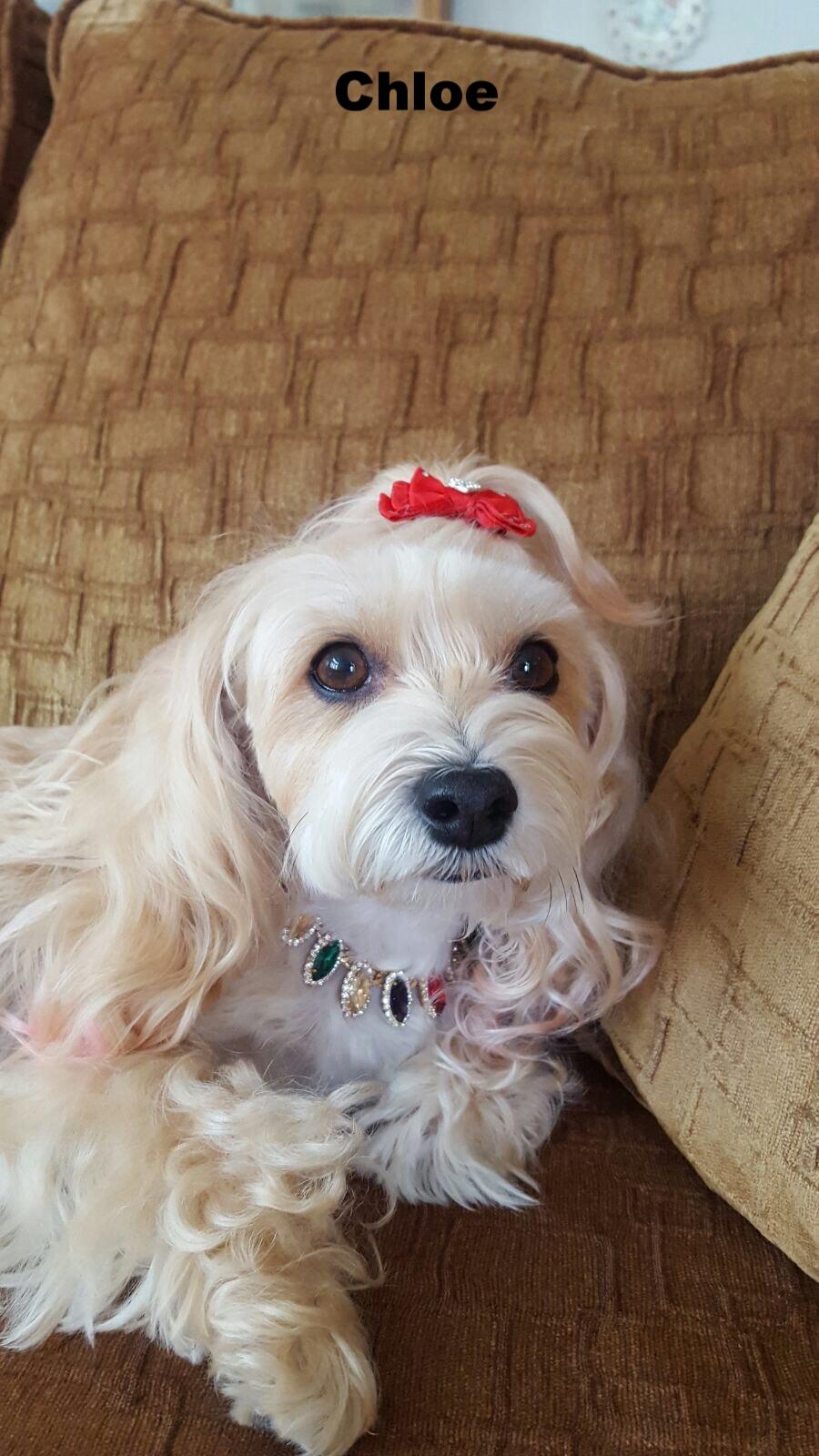 Chloe from California
