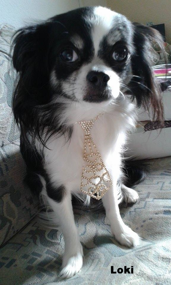 Loki from Germany