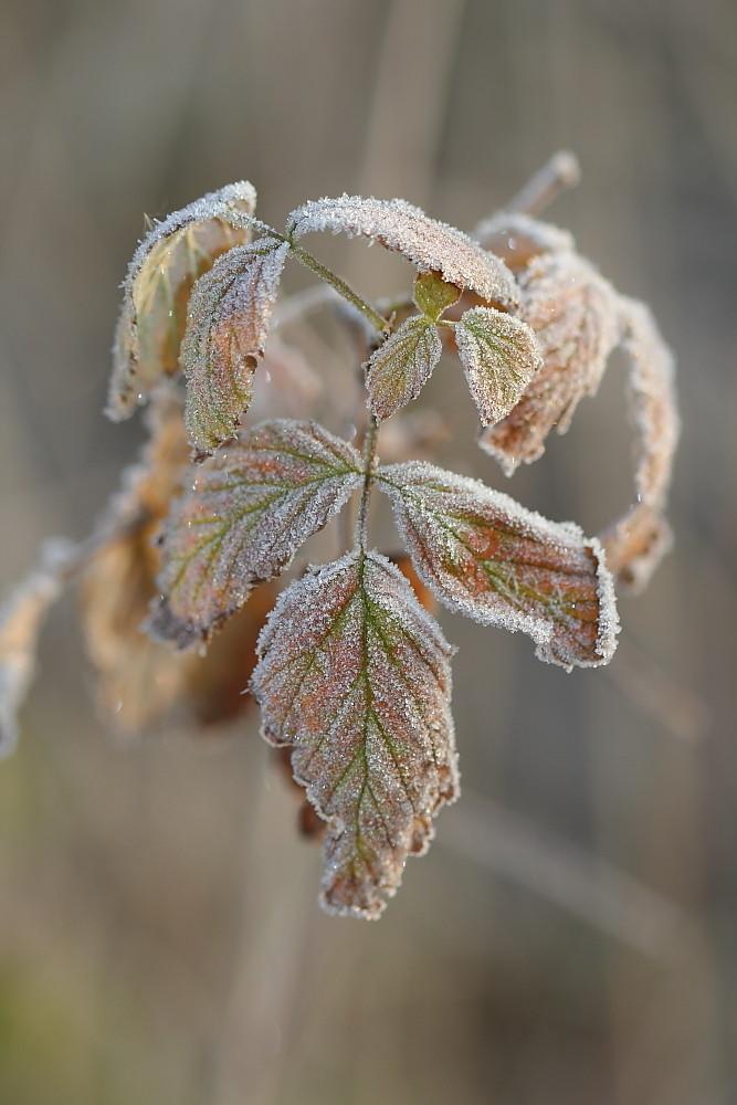 Der kalte Atem der Natur