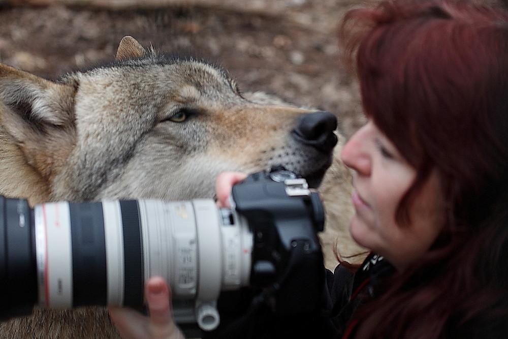 Auge in Auge mit dem Wolf (Foto: Dagmar Growe-Lodzig)