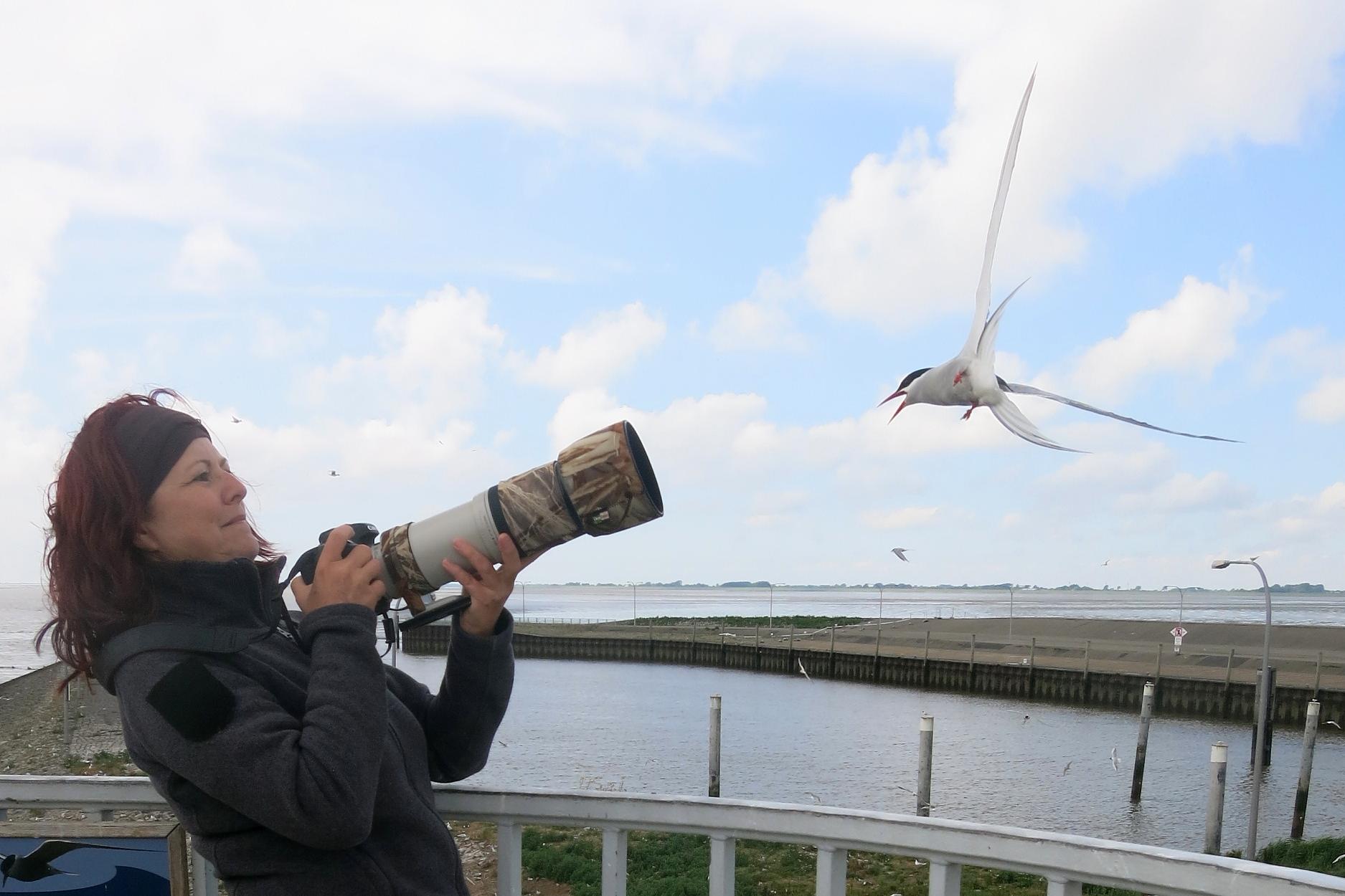 Nordsee, beim Fotografieren von Küstenseeschwalben