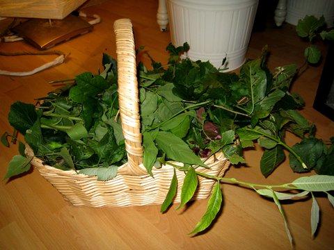 Frisch gepflücktes und gesammeltes Grünfutter