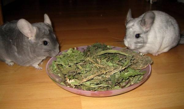 Das Hauptfutter des Chinchillas: Eine Mischung aus getrocknten Kräutern