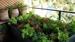 Huerto urbano, Ecología, Murales Verdes, Hazlo en casa