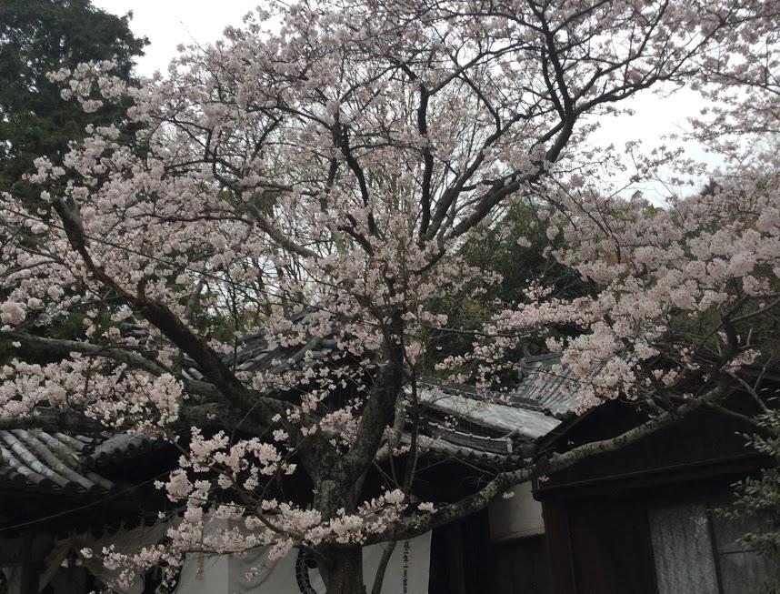 「春日神社」しょうちゃん
