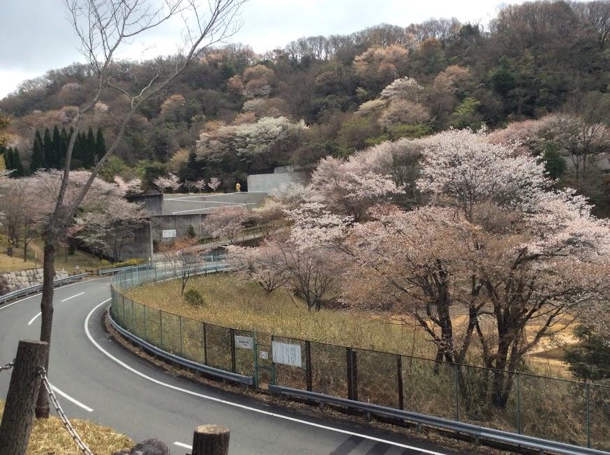 「私の好きな桜山の景色」きみちゃん