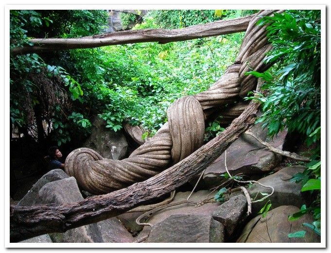Jungle Art - Pha Taem National Park - Ubon Ratchathani Province -