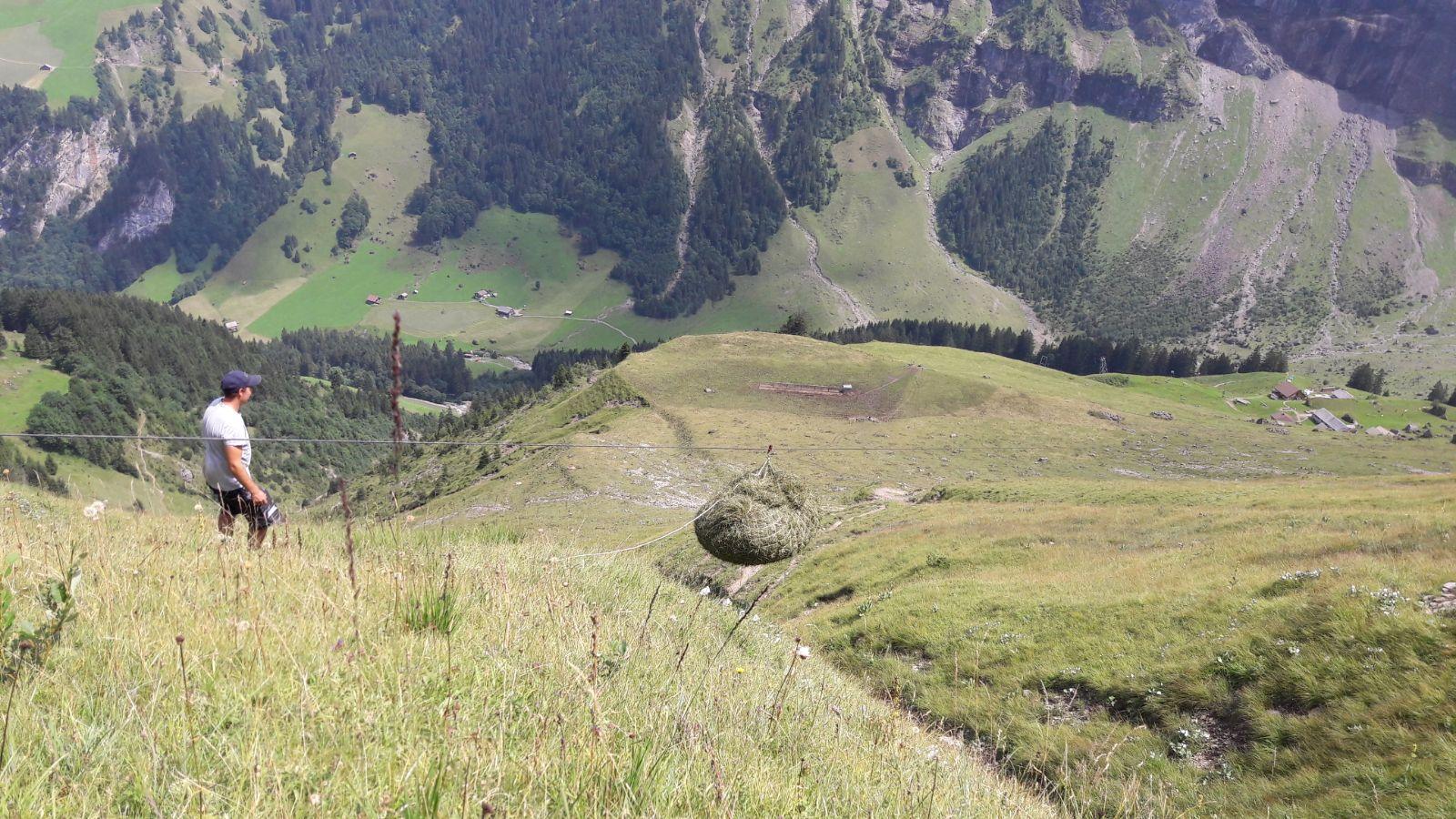 ... saust die wertvolle Ernte talwärts bis zur Alp.