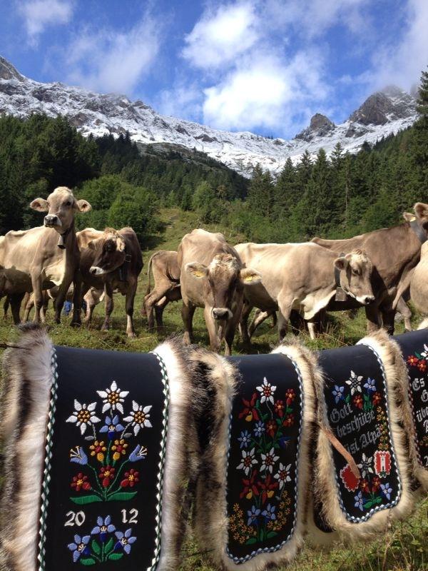 Im Herbst werden die Kühe für die Alpabfahrt geschmückt.